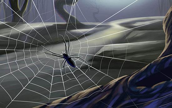 Spider-Web-Wallpaper-HD