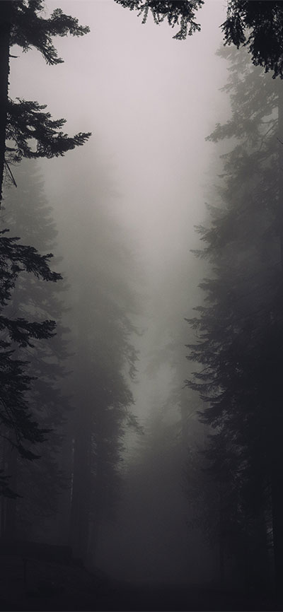 fog_forest_nature_iPhone-XR-Wallpaper