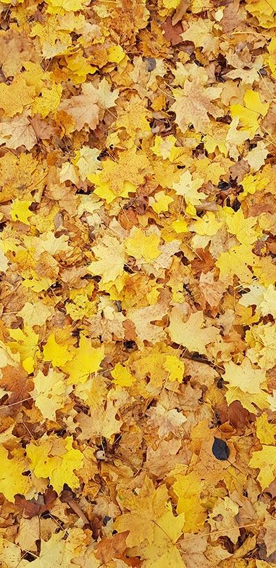 Autum-Leaves-Google-2-XL-&-3-XL-Background