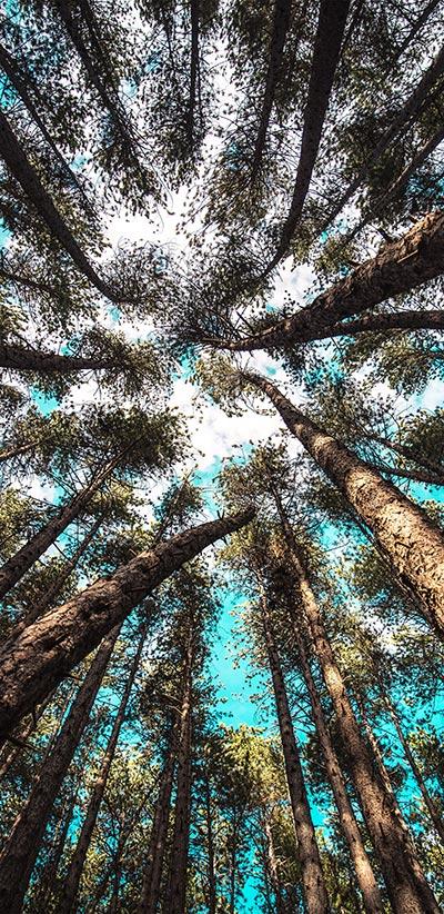 Forest-Google-2-XL-&-3-XL-Wallpaper