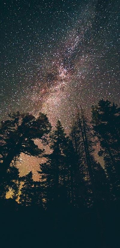 Night-Sky-Red-Trees-Google-2-XL-&-3-XL-Wallpaper