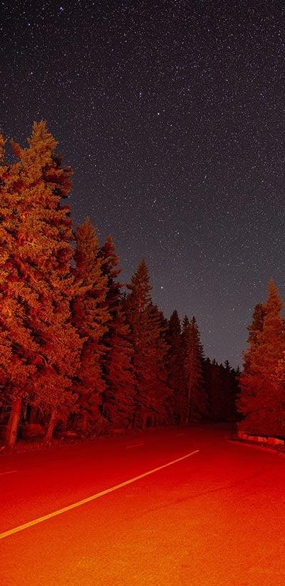 Red-Trees-Google-2-XL-&-3-XL-Wallpaper