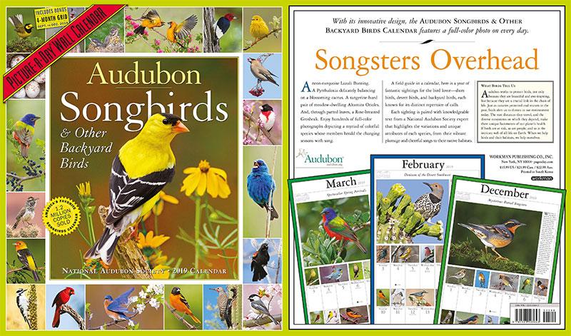 Backyard-Birds-Picture-A-Day-Calendar-2019